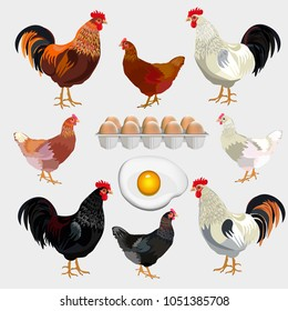 Farm set with rooster, hen and eggs. Vector illustration isolated on black background