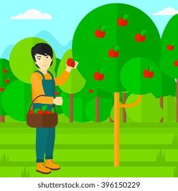Cartoon Apples Basket Images Stock Photos Vectors