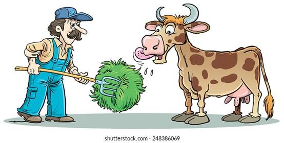 Farmer feed cow