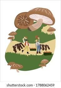 The farmer and his mushroom, the green grass mushroom field