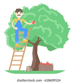 Farmer with mustache dressed in a blue jumpsuit picking apples from the tree standing on the stairs