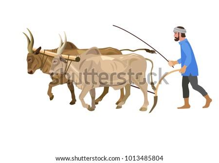 farmer plowing field couple zebu vector のベクター画像素材