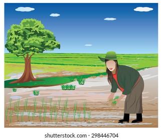 farmer transplant rice seedlings in paddy field vector design