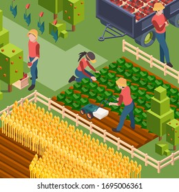 Farmers harvest. Isometric people working on field growth natural eco food watering and cultivated countryside education vector workers