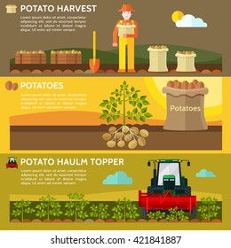 Farmers use farm machinery in the field harvesting potatoes. Potato haulm topper. Potato harvest. Vector illustration.