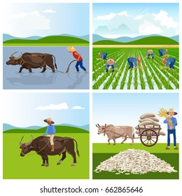 Farmers work in rice fields. Vector illustrations for infographics