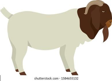 Farming today Boer goat Buck Vector illustration Isolated object set