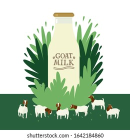 Farming today A milk bottle on floral background Boer goats grazing on a green meadow Cartoon flat vector illustration Countryside and farmland, agricultural industrial Organic farm shop or market set