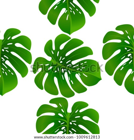 fashionable floral jungle ornament monstera leaf stock vector