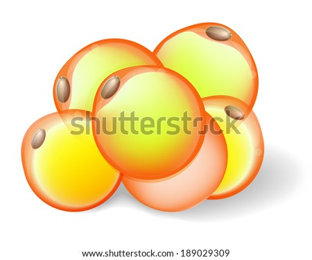 Fat Cells White Adipose Tissue Adipocytes Stock Vector Royalty Free