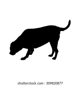 Fat labrador Retriever Sniffer dogs were standing silhouette, 7 years old. Vector illustration save in 10 eps