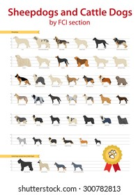 FCI Sheepdogs and Cattle Dogs Group