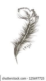 feather of a bird. vector