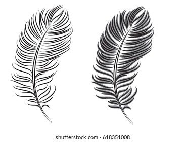 feather graphic style vector illustration isolated on white