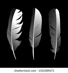 feather on background vectror images