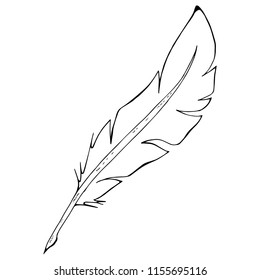 Feather pen. Vector illustration of a feather for calligraphy. Hand drawn feather pen.