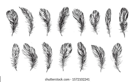 Feather set hand drawn on white background