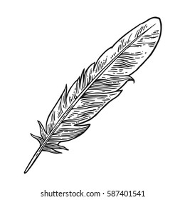 Feather. Vintage black vector engraving illustration. Isolated on white background. Hand drawn in a graphic style.