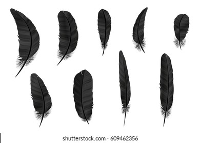 Feathers crow vector set in a 3d realistic detailed style. Icons feathers isolated on a light background. Collection silhouettes dark feathers. Simple icons feathers elements design. illustration