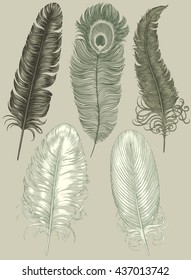 Feathers. Design set. Hand drawn engraving. Vector vintage illustration. Isolated on color background. 8 EPS