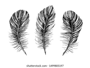 Feathers on white background. Hand drawn sketch style.
