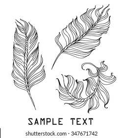 feathers on a white background hand drawn vector illustration