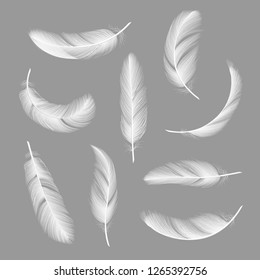 Feathers realistic. Flying furry weightless white swan objects vector isolated on dark background