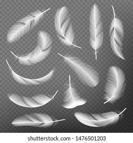 Feathers realistic. Plumage detailing lightness and airiness swan vector collections. Illustration of feather realistic, plumage falling, floating and flight