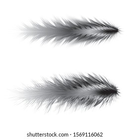 Feathers vector fashion design colorable art brushes & elements