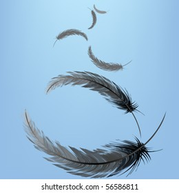 Feathers in the wind