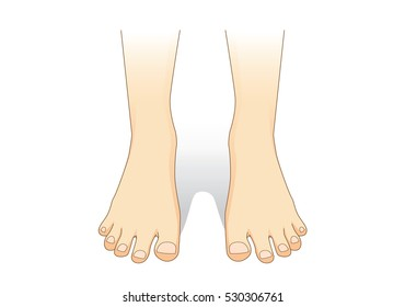 Feet vector in front view. Illustration about foot care.