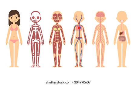 Female body anatomy chart: skeletal, muscular, circulatory, nervous and digestive systems. Flat cartoon style.