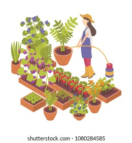 Female cartoon character watering berry, vegetable plants growing in pots and planters isolated on white background.Horticulture, organic gardening and farming.Colorful isometric vector illustration.