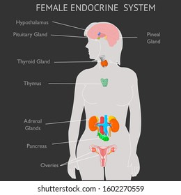 Female Endocrine system parts anatomy. Woman gray silhouette. Explanation Thyroid Parathyroids Adrenals Pineal Hypothalamus Pituitary Gland Reproductive organs Ovaries  Pankreas Black back Vector
