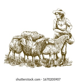 Female farmer feeds the sheep. sketch on a white background. animal husbandry