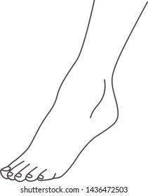 Female foot, leg standing on toes, line drawing of feet, isolated on white background vector illustration, eps 10