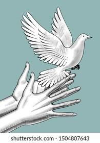 Female hands release a white dove. Vintage engraving stylized drawing. Vector illustration