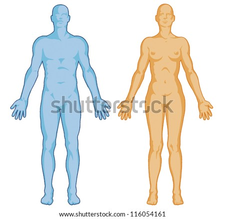 Female Male Body Shapes AAA Human Outline AA