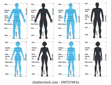 Female and male size chart anatomy human character, people dummy front and view side body silhouette, isolated on white, flat vector illustration. Cartoon woman mannequin people dimension scale.