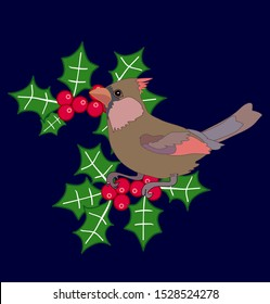 Female red cardinal bird on holly berries winter illustration Christmas vector art