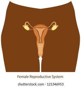 Female reproductive system color