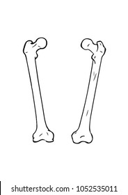 Femur Bone. Vector illustration