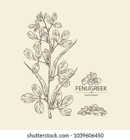 Fenugreek: branch of a plant, leaves, flowers and seeds. Vector hand drawn illustration.