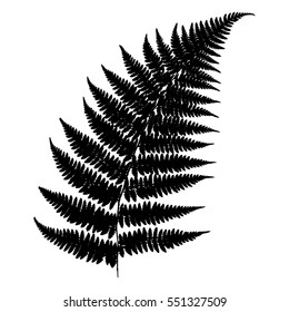 Fern 23. Silhouette of a fern on a white background. Vector.