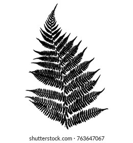 Fern. Black isolated silhouette on white background. Vector illustration.