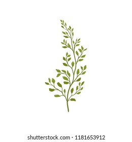 Fern branch with small green foliage. Forest plant. Flat vector element for postcard or poster of flower shop
