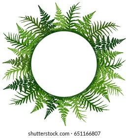 Fern frond frame circle vector illustration. Polypodiophyta plant leaves decoration on white background. Detailed ferns drawing, tropical forest herbs, fern frond grass round border.
