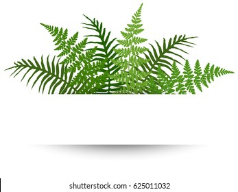 Fern frond frame vector illustration. Polypodiophyta plant leaves decoration on white background. Detailed ferns drawing, tropical forest herbs, fern frond grass border. Card with frame for text.