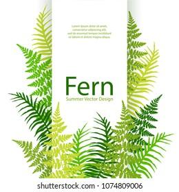 Fern frond tropical leaves frame vector illustration. Bush plant leaves decoration on white background. Detailed bracken new zealand fern tropical forest herbs, fern frond grass vertical card border.