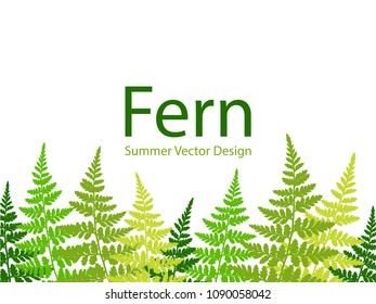 Fern frond tropical leaves frame vector illustration. Bush plant leaves decoration on white background. Detailed bracken and new zealand fern tropical forest herbs, fern frond grass card bottom border